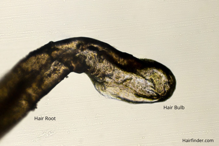 what is hair made of and how does it grow?, Human body
